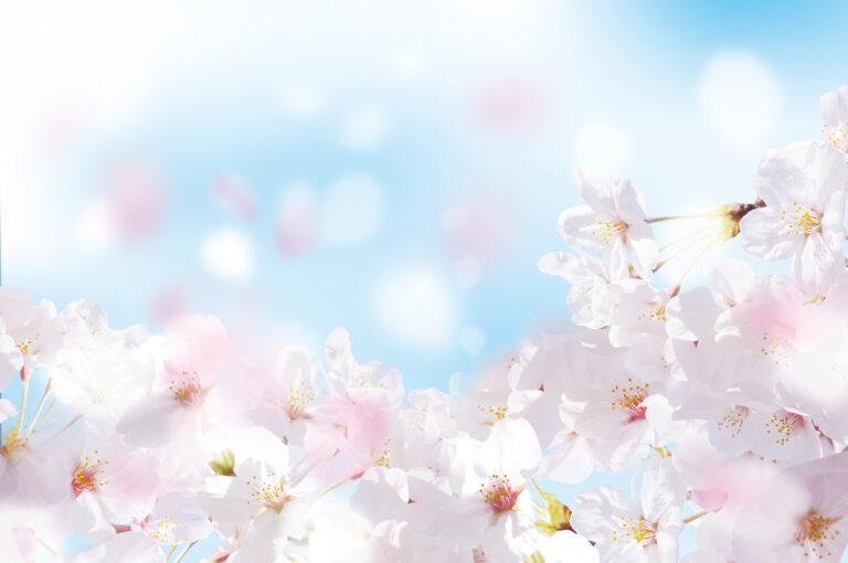 春こそ、人生に祝福を!